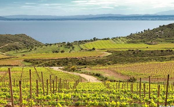Ruta enológica, el camino del vino y el corcho